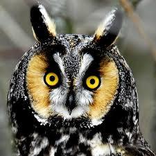 Vox.owl